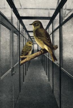 BIRD CORRIDOR 2012 Collage 10x18cm KEELERTORNERO