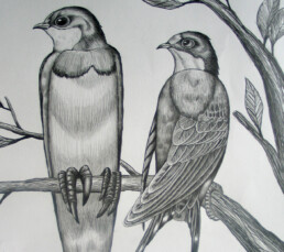 BIRD TREE DETAIL 4 2013 pencil on paper KEELERTORNERO