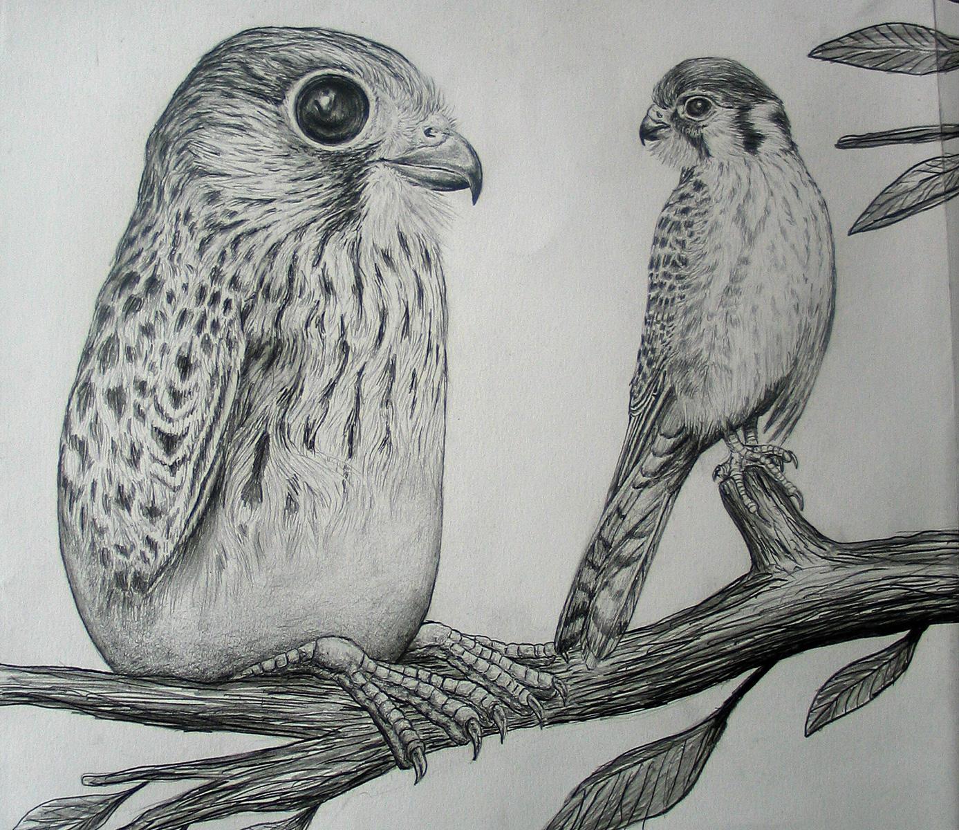 KEELERTORNERO_drawing_03