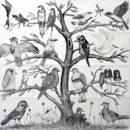 THE BIRD TREE 2013 Pencil on paper 180x180cm KEELERTORNERO